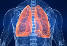 Cellule staminali umane convertite in funzionali cellule polmonari!