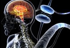 Staminali: Promettente trattamento per il Parkinson!