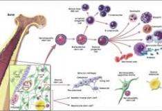 Staminali: Cellule staminali mesenchimali stromali nella cura dell'ictus!