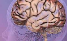 Staminali: Paralisi cerebrale, parte lo studio clinico!