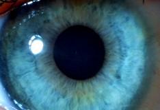 Staminali: Creare tessuti oculari da cellule staminali.
