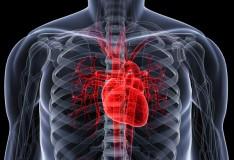 Staminali: Serve cautela nell'uso delle cellule cardiache!