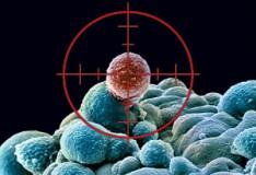Staminali: Trovata la radice del cancro.