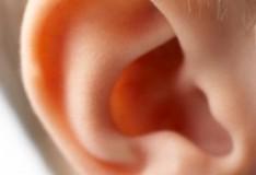 Le staminali sembrano in grado di ridare l'udito!