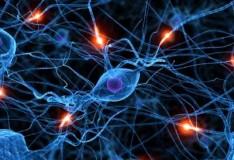 Staminali e sclerosi multipla