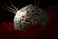 I neuroni possono essere riparati con le staminali!