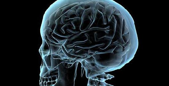 Tessuto di cervelletto ricostruito in laboratorio da cellule staminali umane
